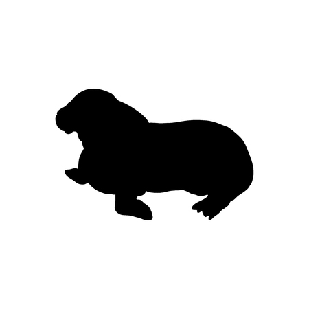Cub walrus arctic black silhouette animal. Vector Illustrator. Imagens - 124557611