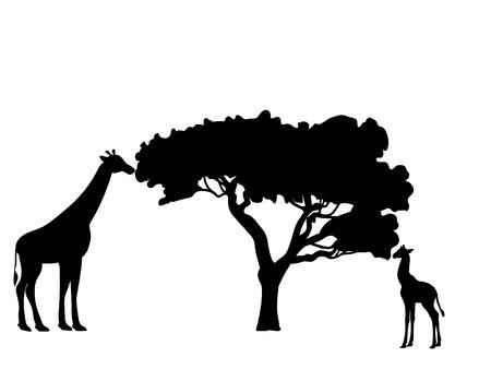 Giraffe and giraffe cub mammal silhouette animal.