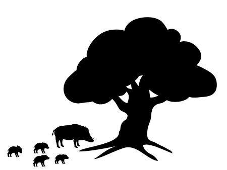 Boars wildlife black silhouette animal