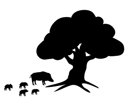 Boars wildlife black silhouette animal