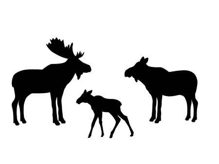 Elk moose mammal black silhouette animal