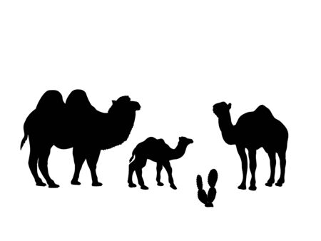 Family of camels. Silhouettes of animals Çizim
