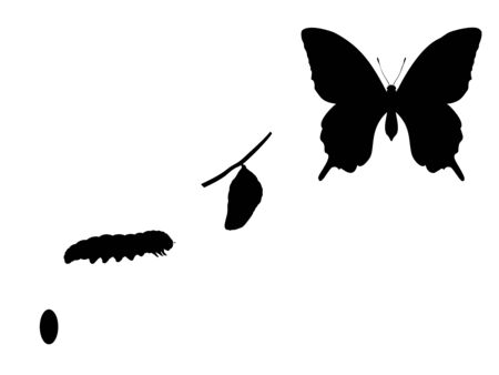 Butterfly birth. Silhouettes butterfly caterpillar and cocoon Illustration