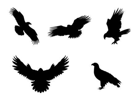 Hawk Eagle Falcon Orlan. Silhouettes predator birds Stock Illustratie