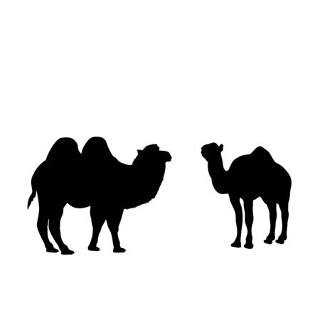 Silhouette of two camels. The family of camels. Vector illustrator