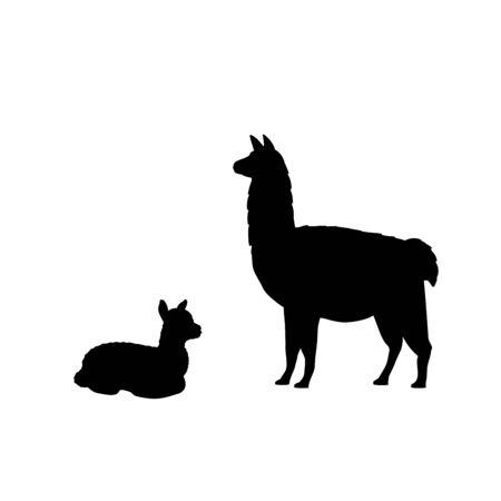 Silhouette of lama alpaca and young little lama alpaca. Vector illustrator
