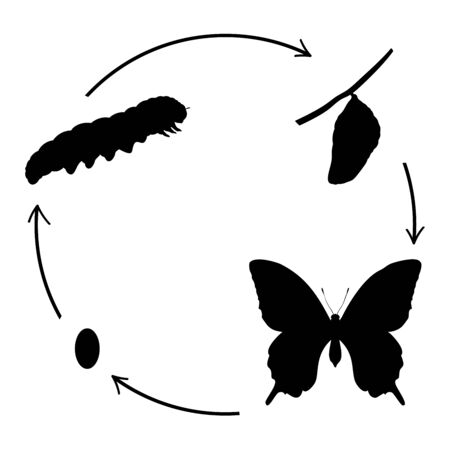 Butterfly birth. Silhouettes butterfly caterpillar and cocoon. Vector illustrator Stock Illustratie