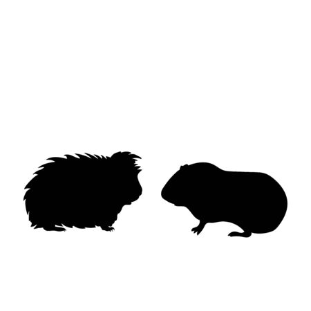 Silhouette of two Guinea pig. Pet animals. Vector illustrator Illustration