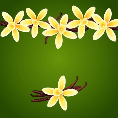 Vanilla flores Fondo floral del vector Foto de archivo - 24080239