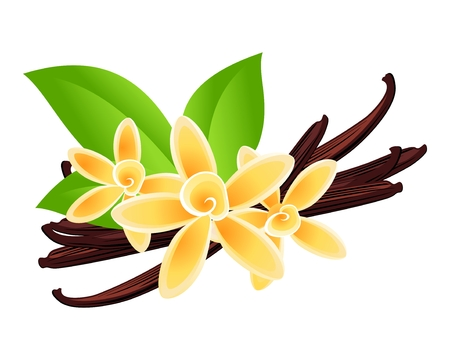 Vanilla flowers  Vector floral background  Vector