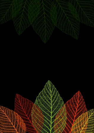 Skeleton leaf background. Vector