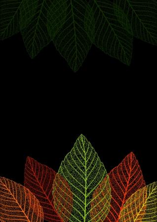 leaf background: Skeleton leaf background.