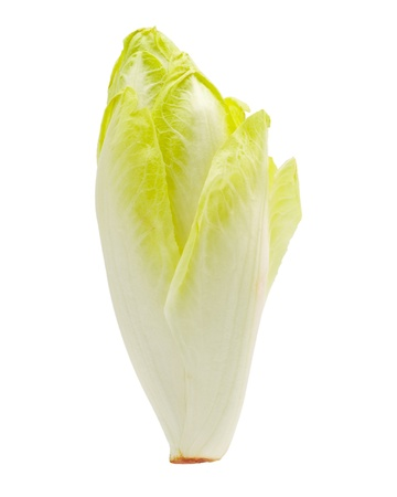 An endive on a white background.