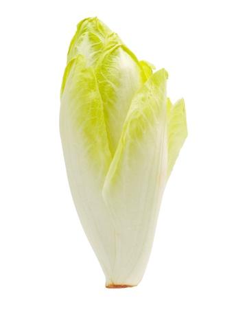 escarola: Un endibia en un fondo blanco. Foto de archivo