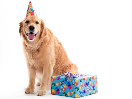 A Golden Retriever dog sitting with a present while wearing a birthday hat on a white background.