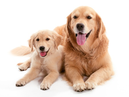 Two dogs laying together on the floor Stock Photo - 9881116