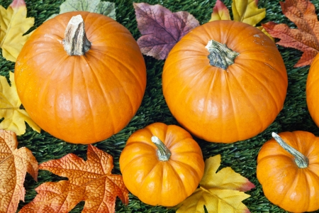 Top view of halloween pumpkins with autumn leave. photo