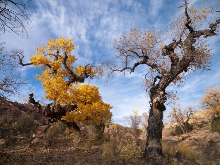cottonwood canyon: Leaves turn yellow in Cottonwood, USA. Stock Photo