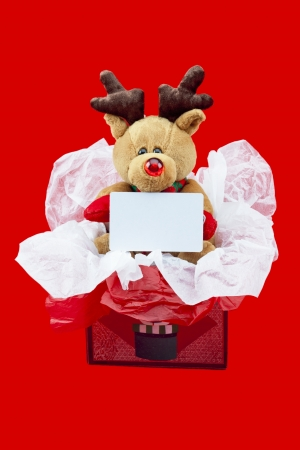 Close-up shot of a cute rudolf the red nose reindeer in a gift box with an empty placard. photo