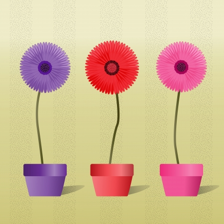 aster: Colorful Gerbera Daisies in a vector image