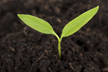 Close up image of green plant growing on soil Stock Photo - 16226100