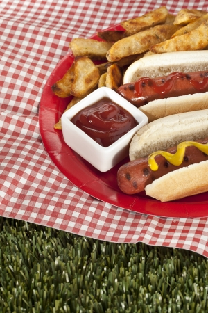 tomato catsup: Cropped image of a grilled hotdog on the bun with fries on the side