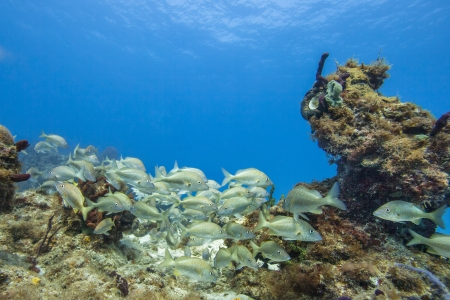 Image of group of fish on coral reef colonies photo