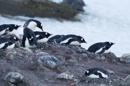 Image of group of penguin in beach Stock Photo - 16226238