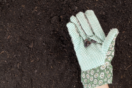 Close-up image of a hand with seed sowing on the soil Stock Photo - 16226054