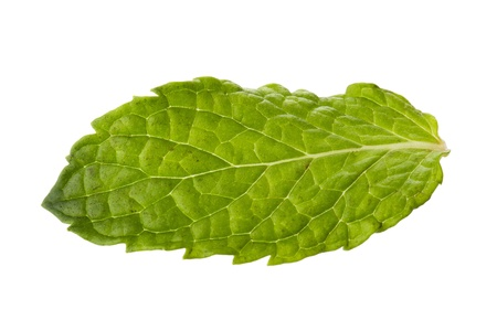 Fresh Mint Leaf in a horizontal image photo