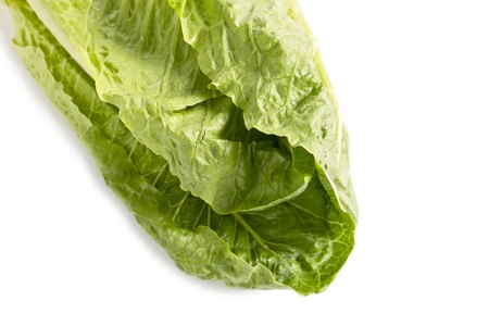 romaine: Romaine lettuce on a white background