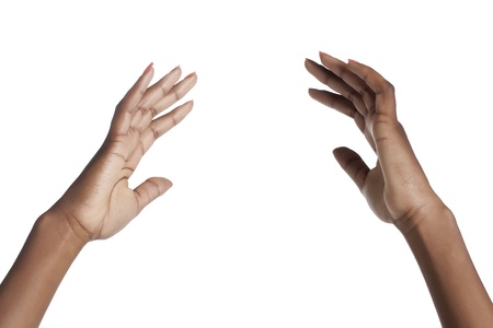 Female hands isolated in a white background Stock Photo - 16963646