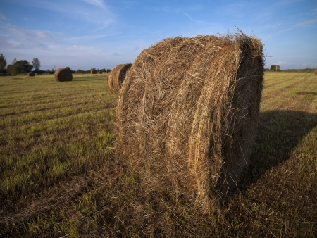 Hay bale in field with sky in the background. Stock Photo - 16978382