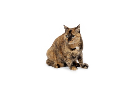 Pet cat sitting on hind legs. Banco de Imagens
