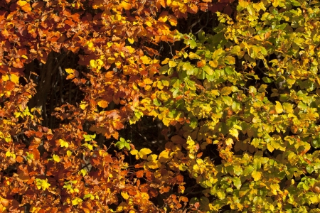 View of autumn leaves background Stock Photo - 16977855