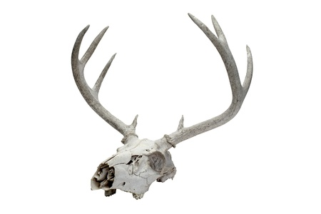 cannibal: Illustration of a deer skull with a long horn Stock Photo