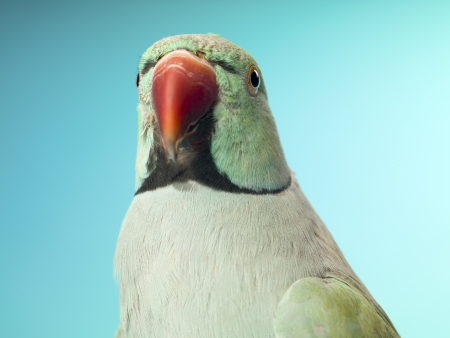 Close-up shot of a parrot. Stock Photo - 16995087
