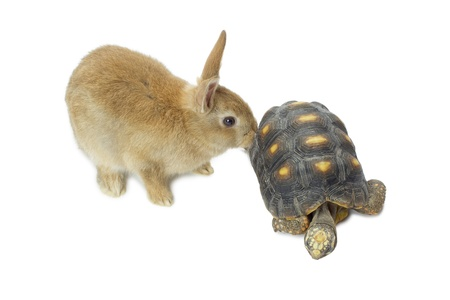 Cute rabbit and turtle isolated in a white background photo