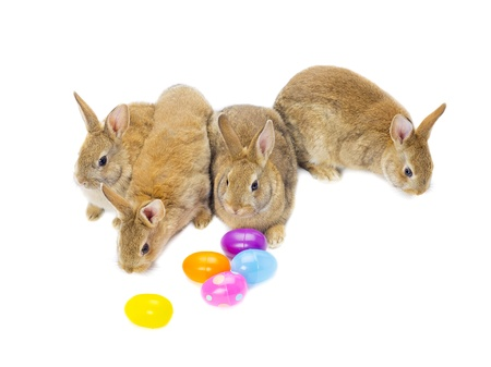 Close-up of rabbit family and colorful easter eggs on white background.