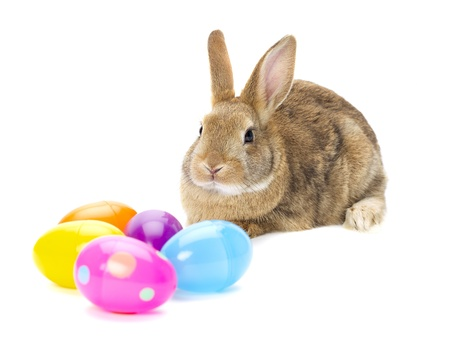 snooping: Rabbit looking at different colors of eggs