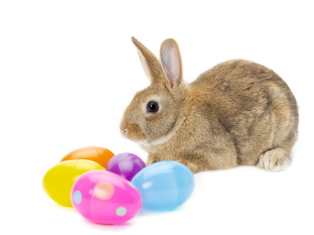 Rabbit with colorful easter eggs on white background Stock Photo - 16995050