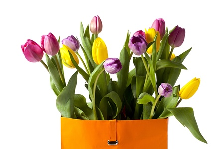 detailed shot: Detailed shot of colorful tulips isolated on white background.