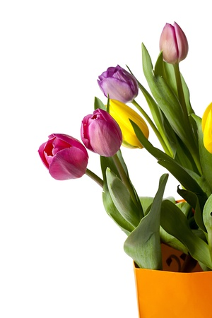 cropped shot: Close-up cropped shot of colorful tulips isolated on white background.