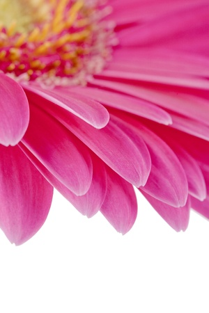 cropped shot: Close-up cropped shot of pink chrysanthemum. Stock Photo