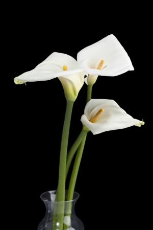 fleur arum: Trois lis calla sur vase en verre sur un fond noir