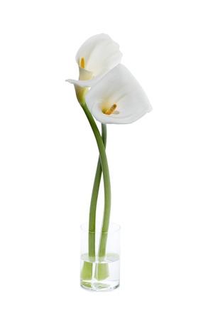 fleur arum: Image de lis calla blanc sur le verre avec de l'eau contre le fond blanc