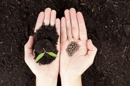 Open hands with newly sprout plant and seeds photo