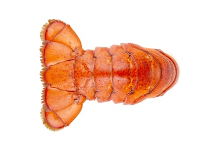 lobster tail: Close up image of a lobster tail against white background