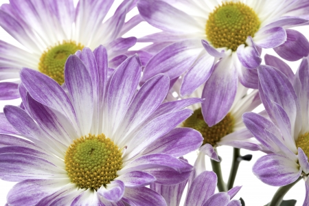 detailed shot: Detailed shot of purple flowers. Stock Photo