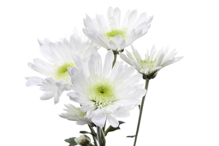 detailed shot: Detailed shot of white flowers on white background.